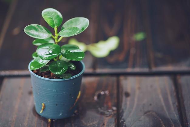 Mooie kleine kleine boom in de pod op houten tafel in de tuin
