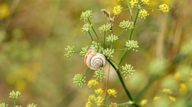 Mooie kleine slak op de bloem in de natuur in de herfst