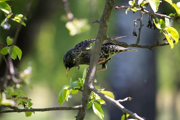 Mooie kleine vogel op een boomtak met groene bladeren kleine roek die in de zomer op een boom rust