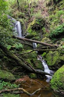 Mooie kleine waterval in het bos