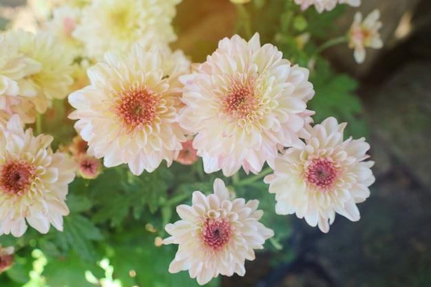 Mooie kleine witte bloemen groene bladeren in zonlicht van de zomertijd. soft focus.