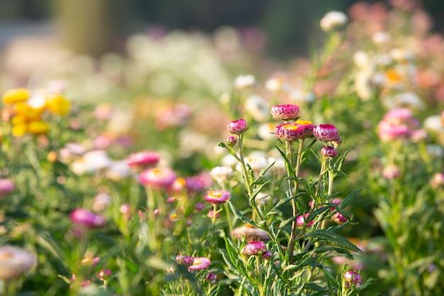 Mooie kleurrijke bloemachtergrond.