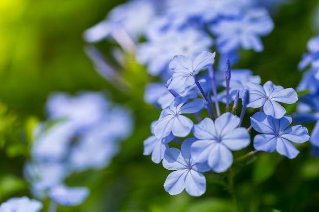 Mooie kleurrijke bloemen die buiten zijn met de ochtendzon
