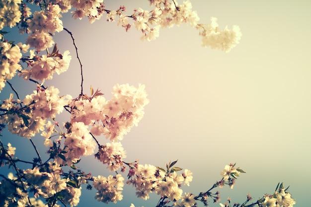 Mooie kleurrijke bloemenachtergrond vervagen. horizontaal. lente concept. toning. selectieve focus.