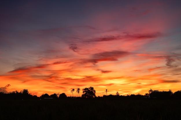 Mooie kleurrijke dramatische hemel met wolken over silhouetaanplanting op platteland