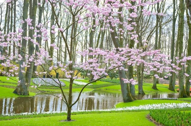 Mooie kleurrijke lentebloemen en watermeer in park in nederland (holland)
