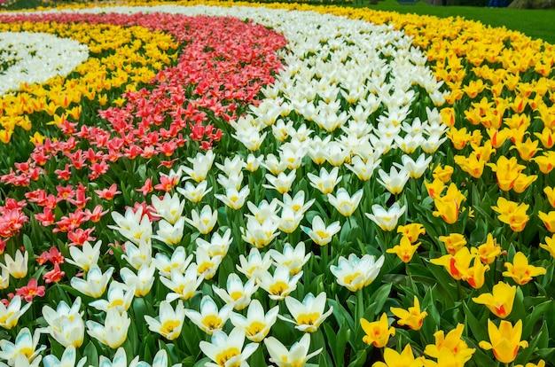 Mooie kleurrijke lentebloemen in park in nederland (holland)