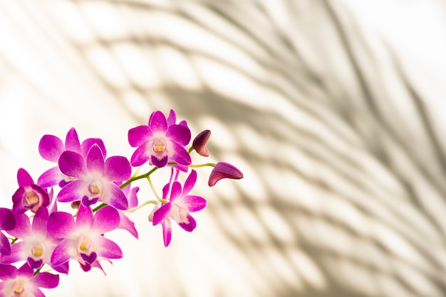 Mooie kleurrijke orchideeën. witte en roze kleur