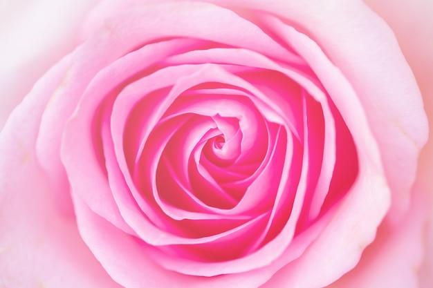 Mooie kleurrijke rozen bloemblaadjes close-up macro