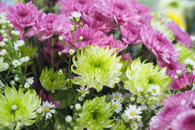 Mooie kleurrijke verse bloemenaard als achtergrond