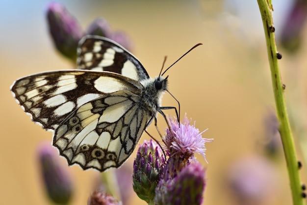 Mooie kleurrijke vlinderzitting op bloem in aard. zomerdag met zon buiten op weide. col