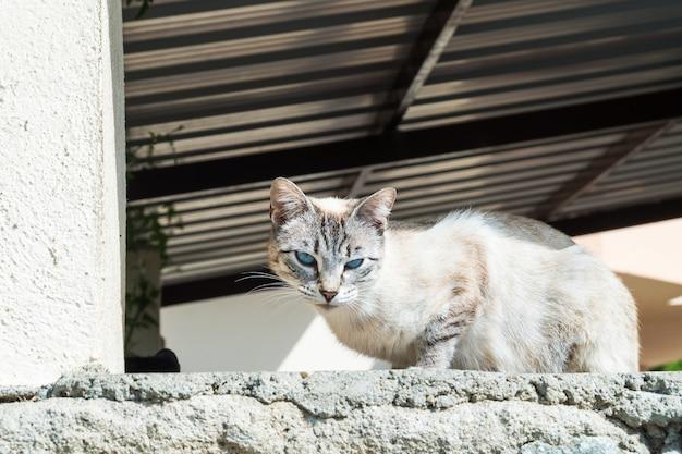 Mooie knappe zwerfkat ligt te zonnebaden in de ochtendzon op een muur