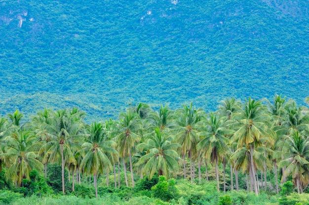 Mooie kokospalmlandbouwbedrijven en bergen in thailand.