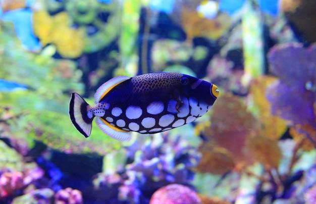 Mooie koraalrifvissen onderwater in aquariumtank.