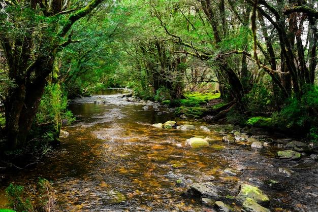 Mooie kreekrivier in regenwoud in tasmanige