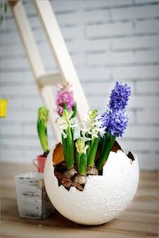 Mooie krokussen in een decoratief ei, pasen-decoratie