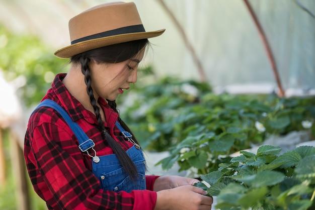 Mooie landbouwersvrouw die aardbeilandbouwbedrijf controleert