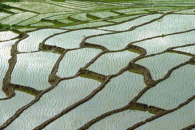 Mooie landschapsmening van rijstterrassen en huis in chiang mai, thailand.
