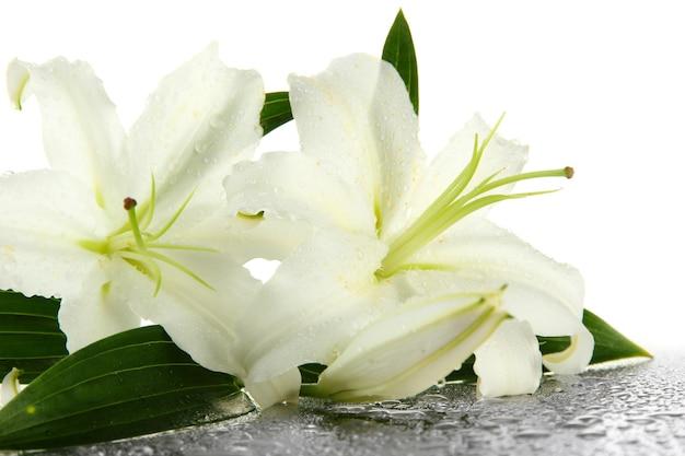 Mooie lelie, geïsoleerd op wit