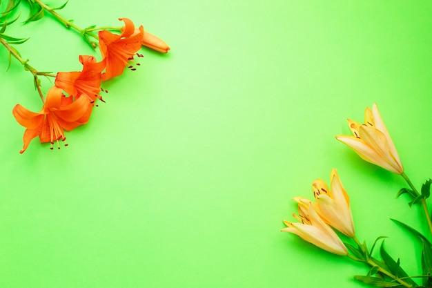 Mooie leliebloemen met knop op groene achtergrond.