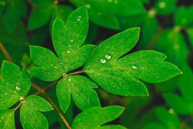 Mooie levendige groene bladeren met druppels.