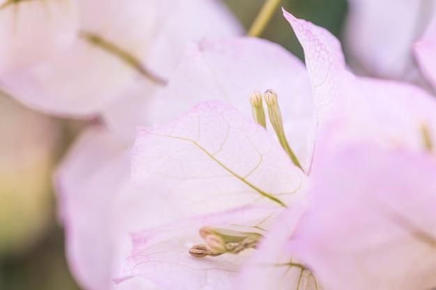 Mooie lichtpaarse frisse bloembladen