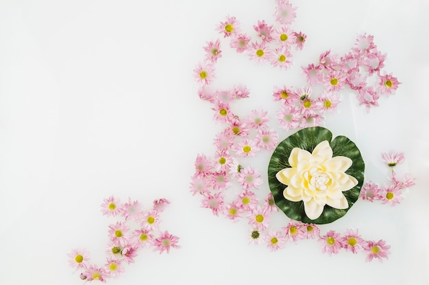 Mooie lotusbloem en roze bloemen in kuuroord met melk