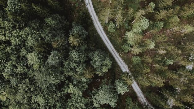 Mooie luchtfoto van de weg langs de groene hoge bomen