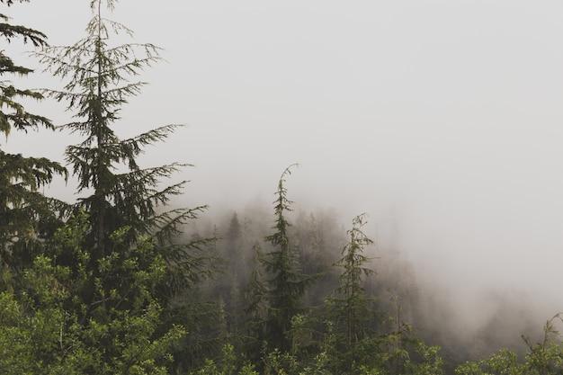 Mooie luchtfoto van een mistig bos