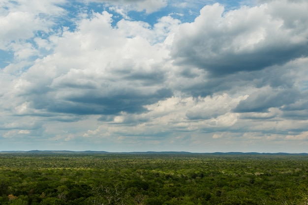 Mooie luchtfoto van het groene regenwoud