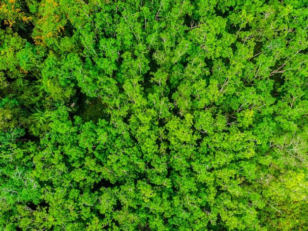 Mooie luchtmening van aardbomen in het bos