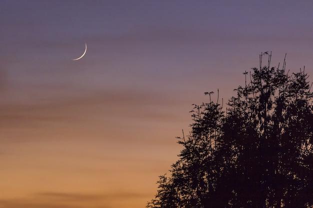 Mooie maan in de kleurrijke lucht boven de bomen