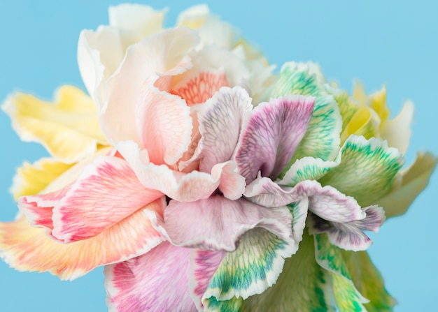 Mooie macro bloeide bloem