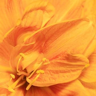 Mooie macro de lentebloem