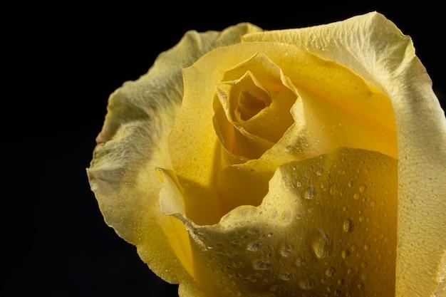Mooie macro geel nam toe