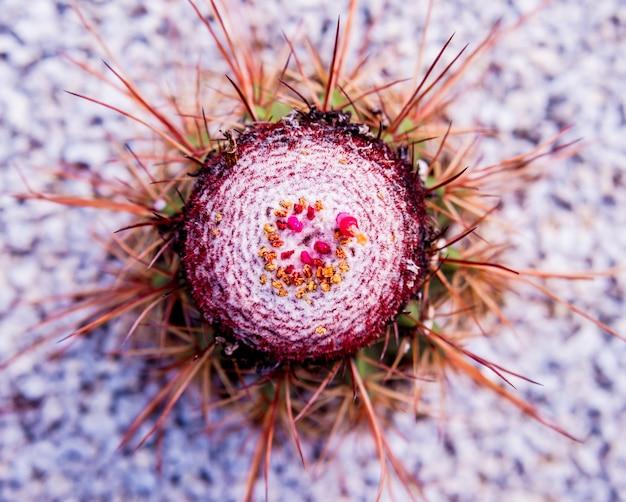 Mooie macro-opnamen van stekelige cactus.