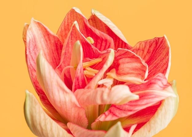 Mooie macro peachy bloem