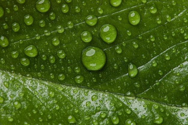 Mooie macro plant met regendruppels