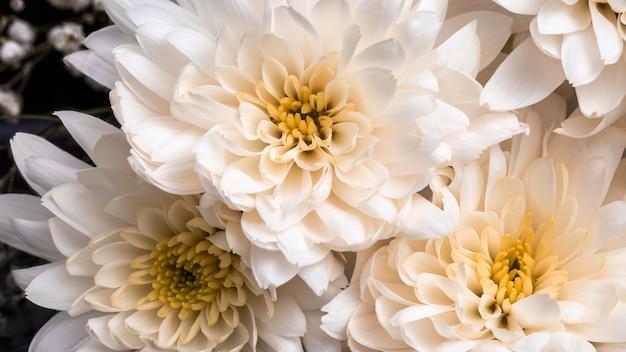 Mooie macro witte bloem