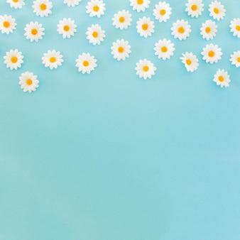 Mooie madeliefjes op blauwe achtergrond met kopie ruimte onderaan