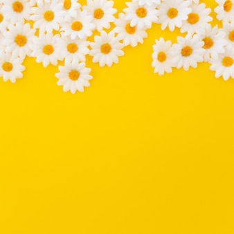 Mooie madeliefjes op gele achtergrond met copyspace onderaan