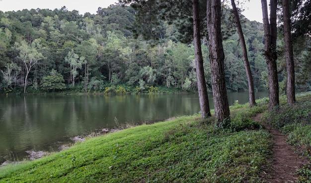 Mooie mening van de bezinning van de pijnboomboom in een meer bij het nationale park van pang oung in mae hong son, thailand