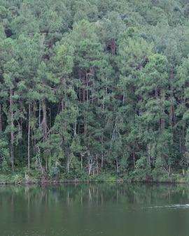 Mooie mening van de bezinning van de pijnboomboom in een meer in mae hong son, thailand