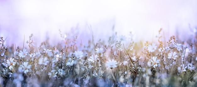 Mooie ochtend in de weide zachte bloemen achtergrond