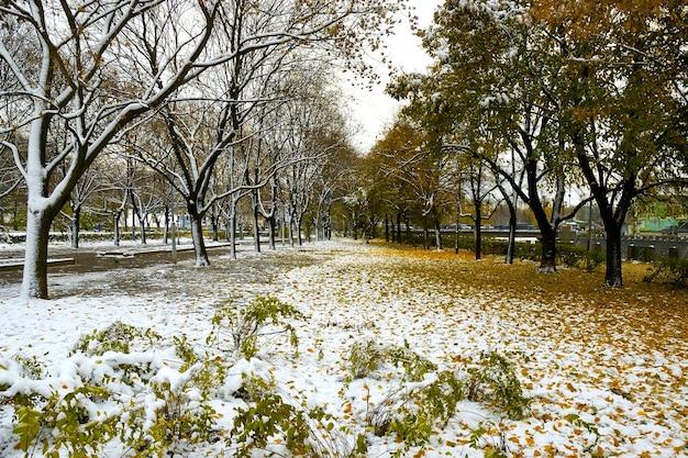 Mooie ochtendstad in de winter begint, bomen bedekt met sneeuw op de achtergrond
