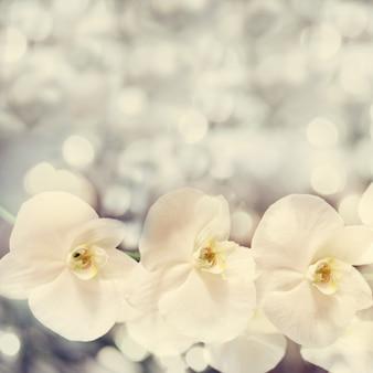 Mooie onscherpe achtergrond met mooie witte orchideebloemen. vinta