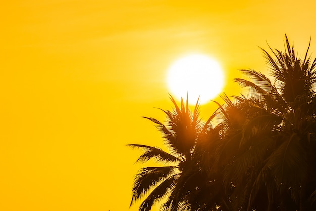 Mooie openluchtaard met hemel en zonsondergang of zonsopgang rond kokosnotenpalm