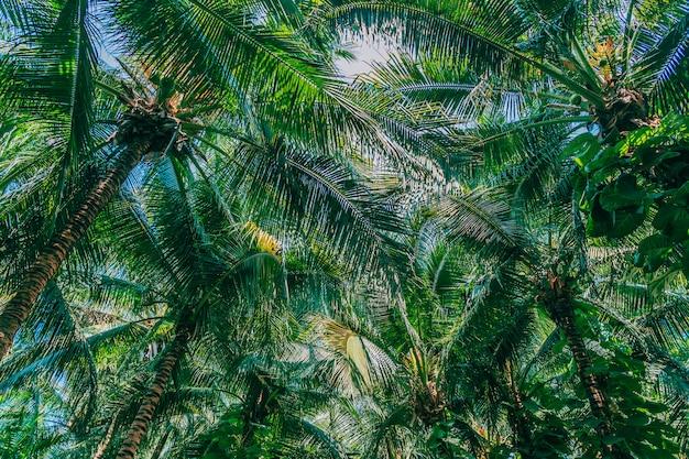Mooie openluchtaard met kokosnotenpalm en blad op blauwe hemel