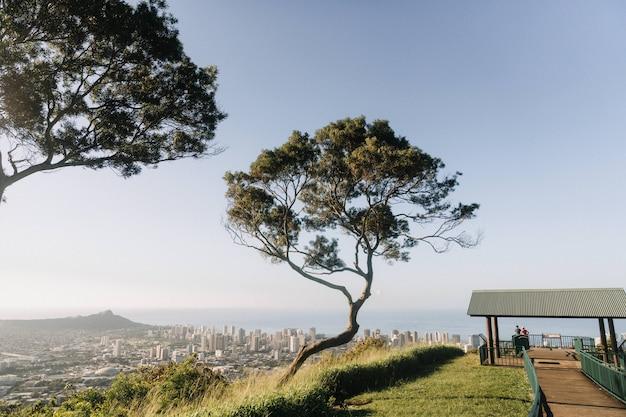 Mooie opname van een boom in de bergen met uitzicht op honolulu, hawaii in de vs.