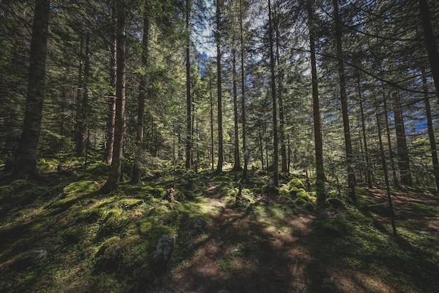 Mooie opname van een bos met zonlicht